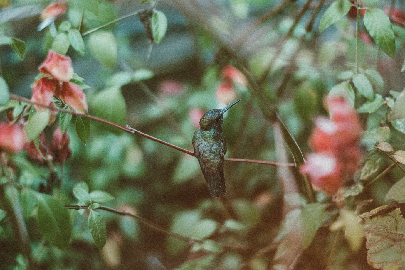 collaboration in technology image - hummingbird sat on a twig